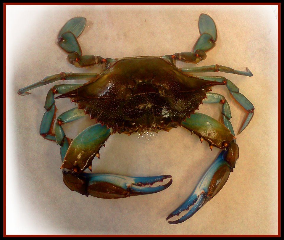 Fat Crabs Rib Company Corolla Nc